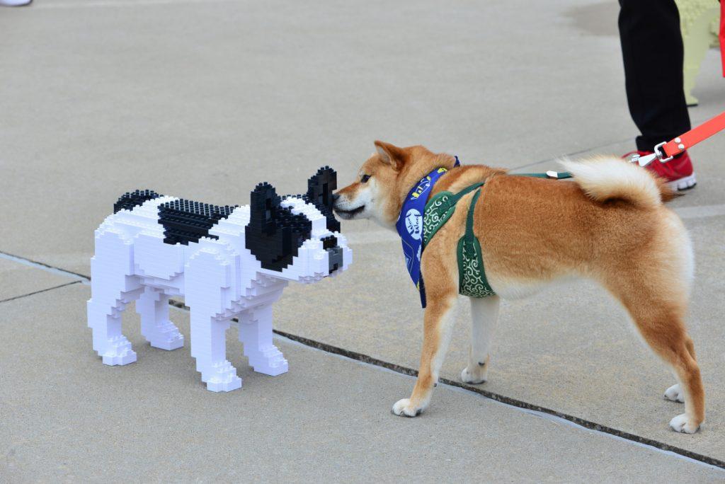 giochi bulldog francese